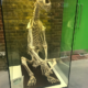 Photo of display case at the Royal Veterinary College