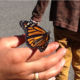 A Monarch butterfly perches on a teacher's hand.