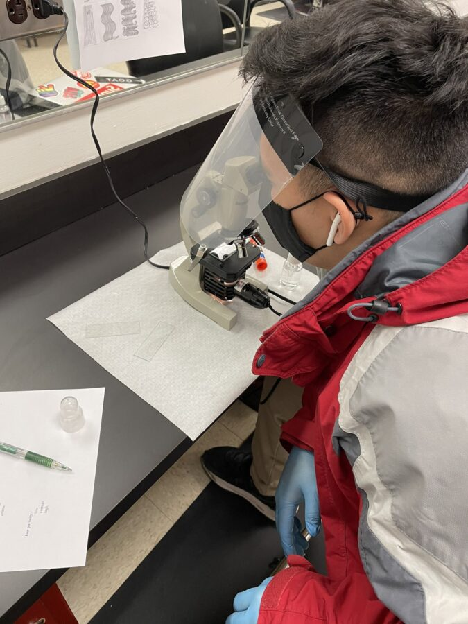 A Barbering student performs hair analysis using a microscope.